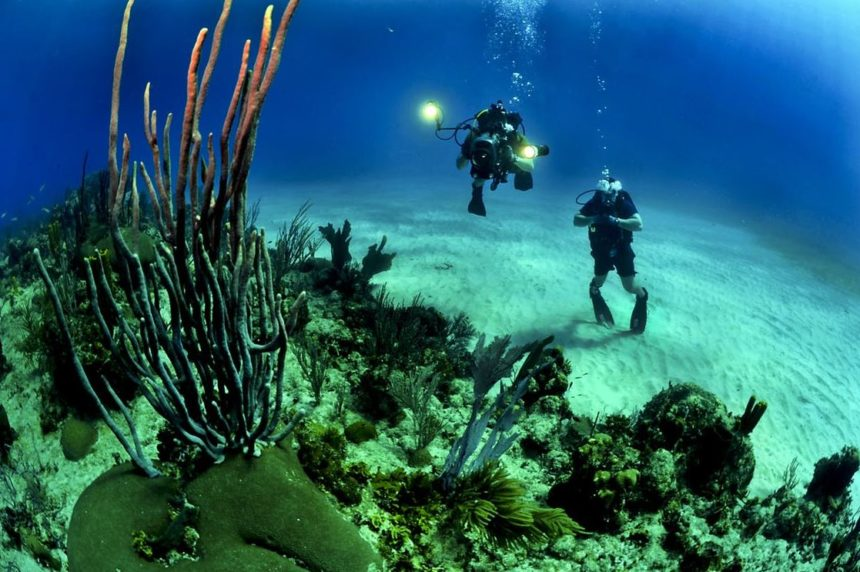 Best Programs For Careers in Diving and Divemastering