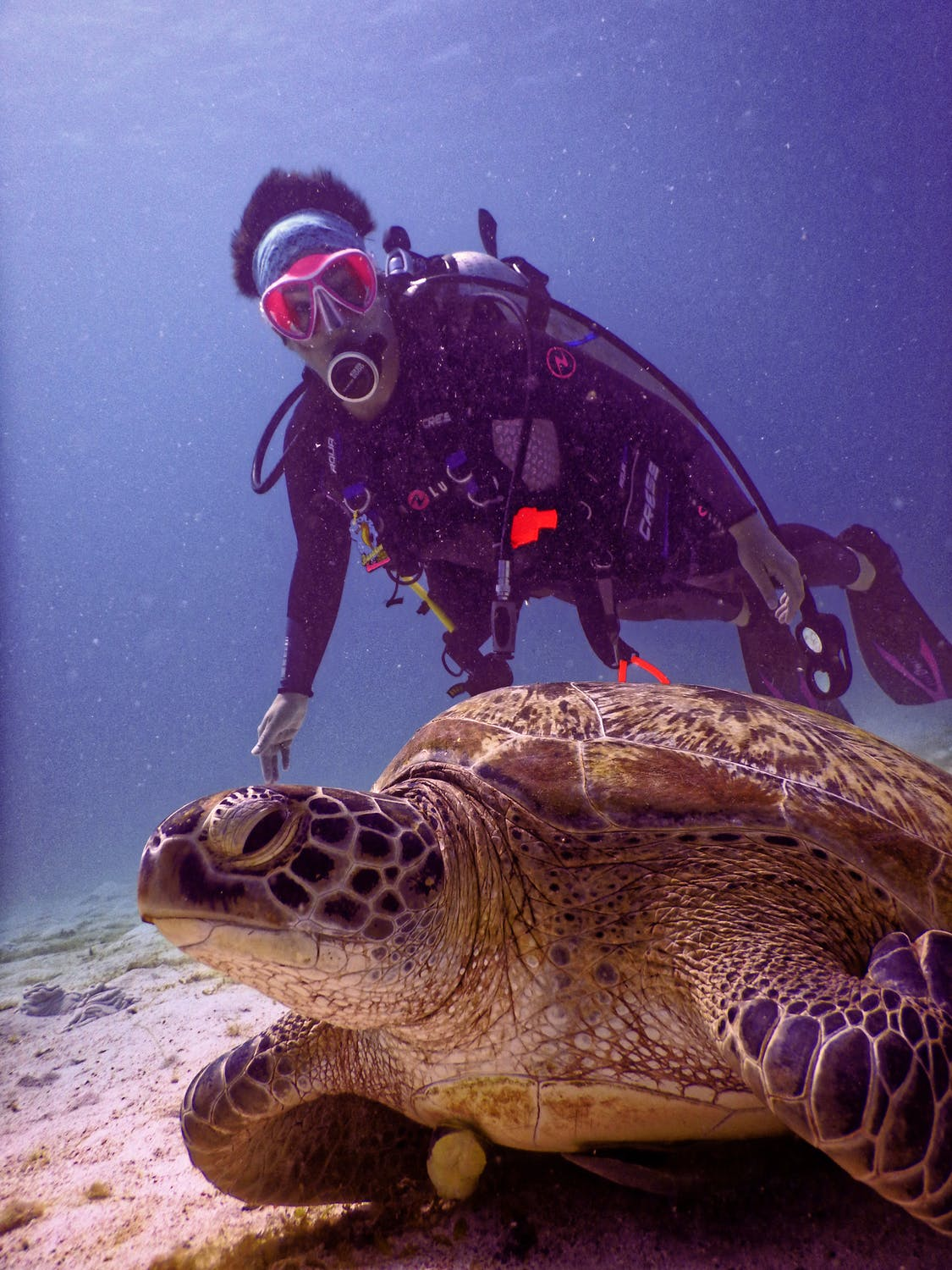 scuba diver swimming next to turtle